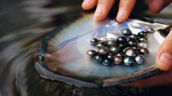 A pearl-diving session could yield significant returns!